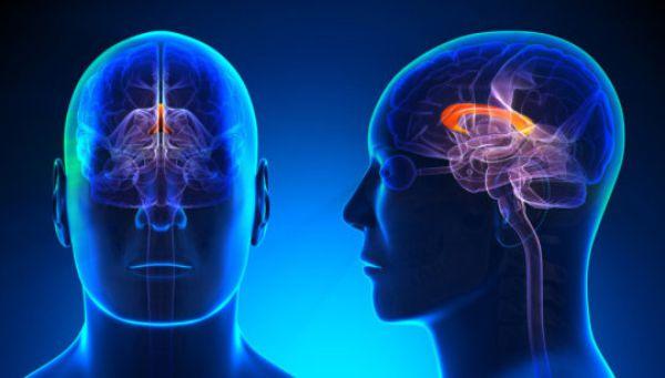 Sintomi sclerosi multipla yahoo dating
