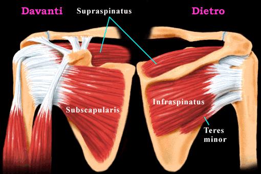 Trauma patrimoniale di reparti cervicali di una spina dorsale